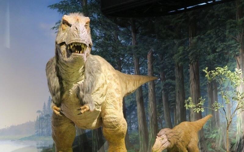 茨城県自然博物館の恐竜